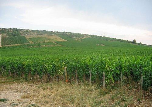 Rượu vang Nuits-Saint-Georges là gì?
