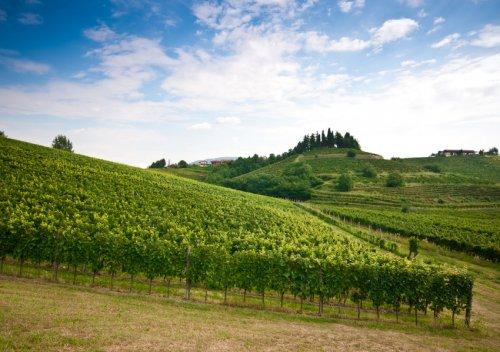 Rượu vang Friuli-Venezia Giulia là gì? Thiên đường rượu vang trắng của Ý: Friuli-Venezia Giulia