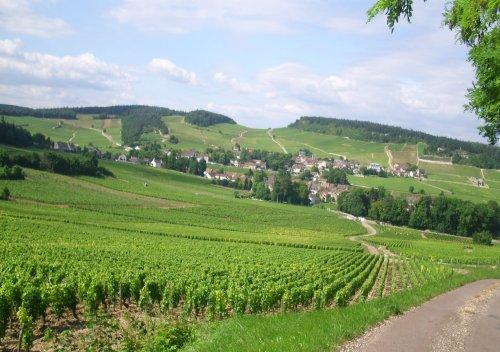 Côte Chalonnaise là gì? Tìm hiểu rượu vang vùng Côte Chalonnaise