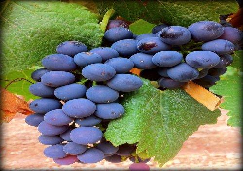 Syrah là gì? Tìm hiểu bí mật về rượu vang Syrah
