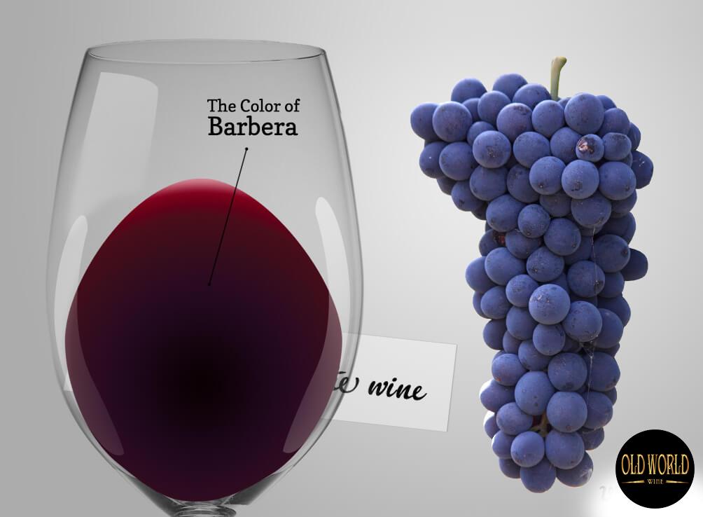 Barbera là gì? Tìm hiểu về Rượu vang Barbera