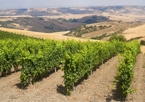 Chuyến đi đến các làng rượu vang của Ý (Phần hai)