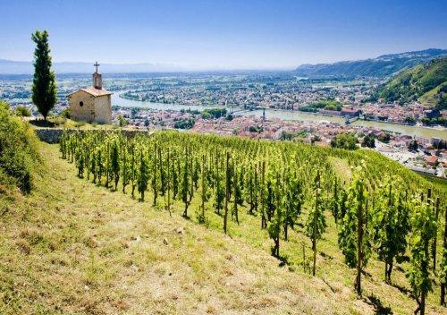 Rượu vang Rhône là gì? Tìm hiểu thông tin rượu vang Côtes-du-Rhône