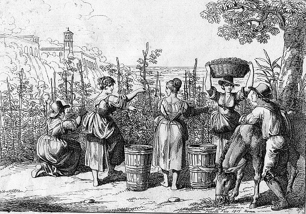 Rượu vang Ý - Tìm hiểu tất tần tật về rượu vang Ý
