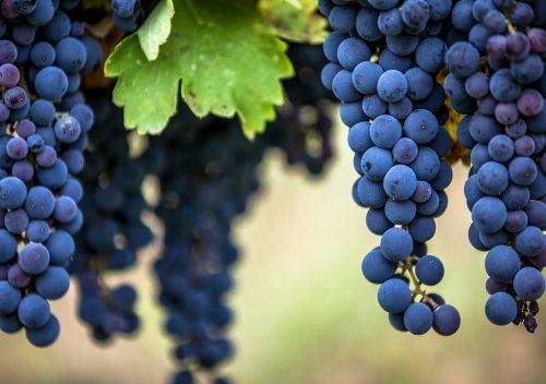 Aglianico là gì? Tìm hiểu rượu vang Aglianico
