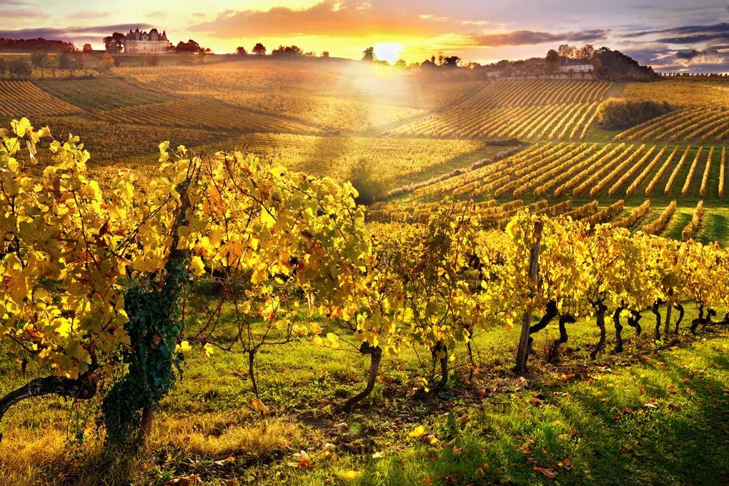 Rượu vang Pháp là gì? Khám phá bản đồ rượu vang Pháp
