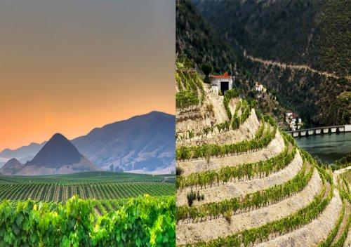 Sự khác nhau giữa rượu vang rẻ tiền và rượu vang đắt tiền